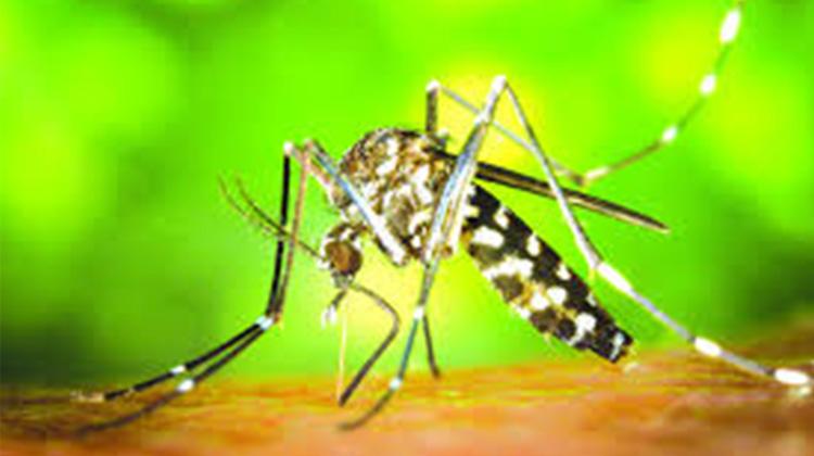 Sucesso na luta contra o Aedes aegypti